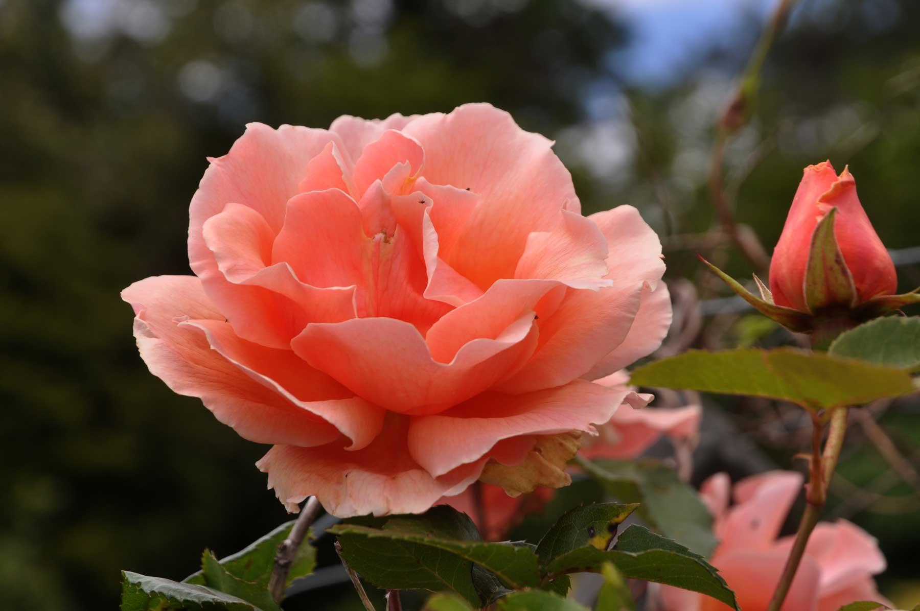 Cashel House Hotel, Connemara : Award Winning Gardens