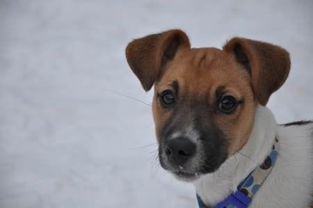 Pet Friendly Hotels, Connemara, Ireland - Sammy the dog